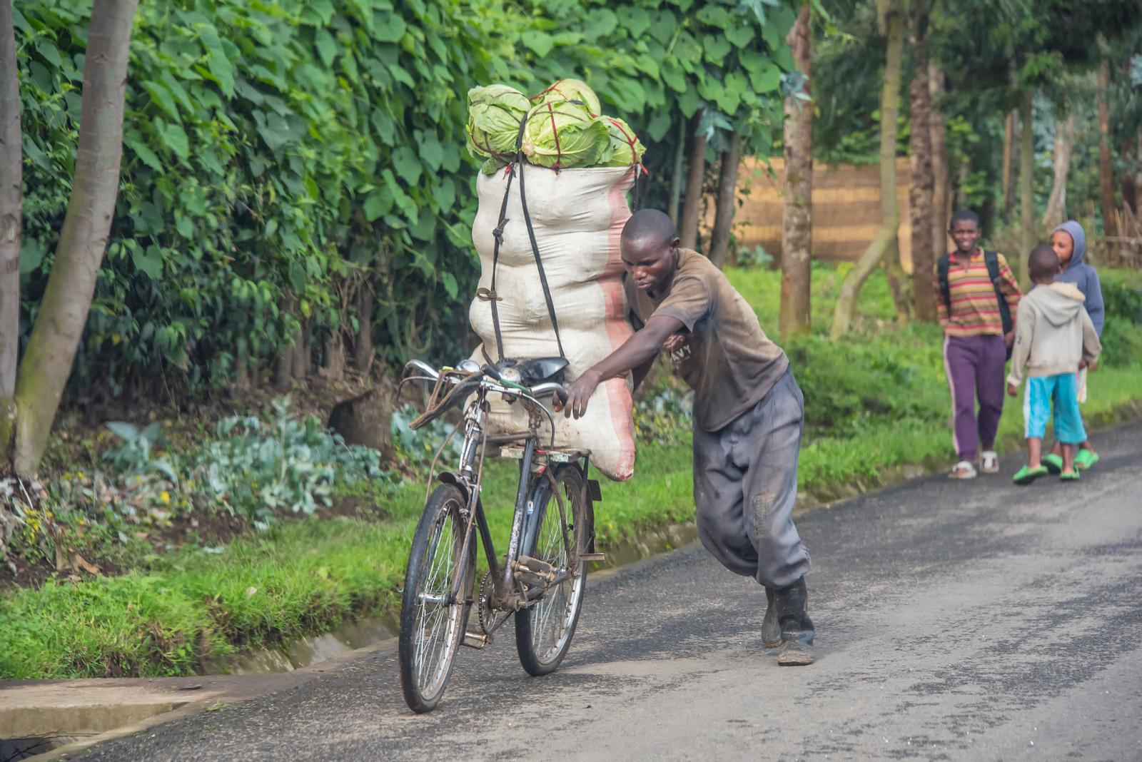 Man-wheeling-Cabbages-DSC_0175