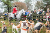 SPECTATORS LOVE TO WATCH THE START OF THE THANKSGIVING HUNT AND THE HOUNDS LOVE TO MEET THEM