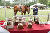 SOME DAY.   TROPHIES ASSOCIATED WITH THE DEEP RUN  USEF PREMIER HORSE SHOW   AT THE SHOWGROUNDS