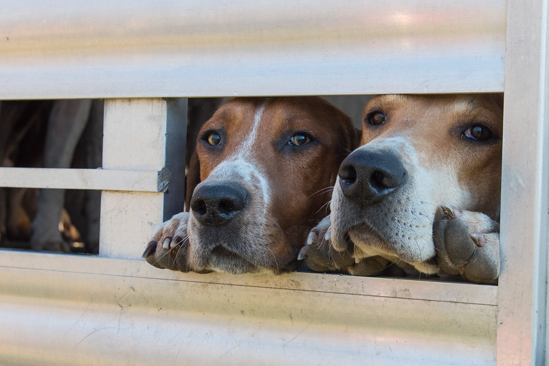 Please let us out!!  We are ready