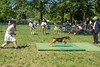 Hound show competition at Moeven Park