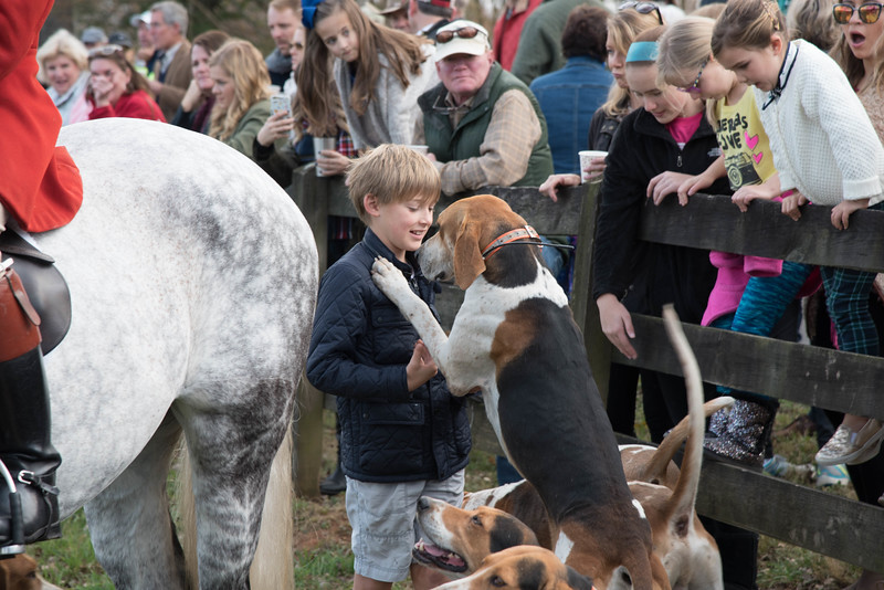 Meeting the hounds at the Thanksgiving meet