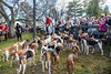 """Holding up "" Hounds stay near the huntsman before the hunt begins."