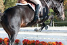 VHSA Silver Lining Horse Show 10-20-12-7624