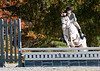 VHSA Silver Lining Horse Show 10-20-12-7653