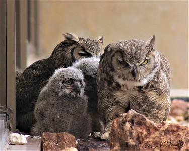 Owl Gardians