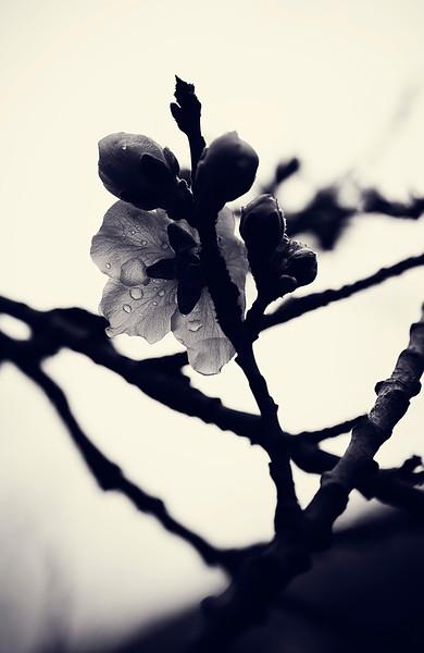 IMAGE: http://phlotography.smugmug.com/DRyan/Nature/Natural-World-2/i-DFLGKWR/0/L/MG4312-a-L.jpg