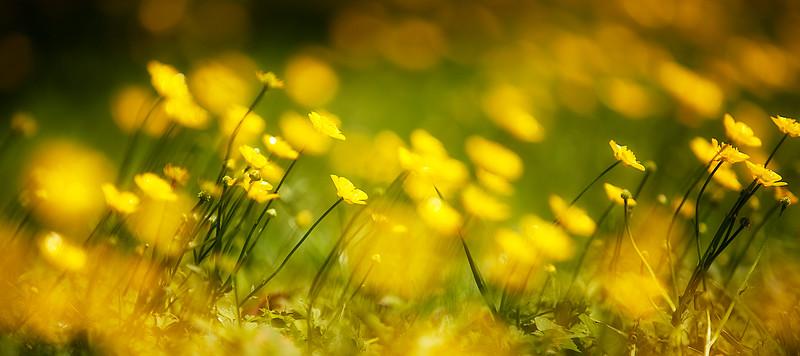 IMAGE: http://phlotography.smugmug.com/DRyan/Nature/Natural-World-2/i-gWXFswC/0/L/_MG_9158%20nat-L.jpg