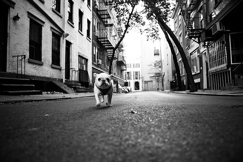 IMAGE: http://phlotography.smugmug.com/DRyan/New-York-City-2012-2013/West-Village/i-pr3f7WH/0/L/_MG_9077%20west%20vlg-L.jpg