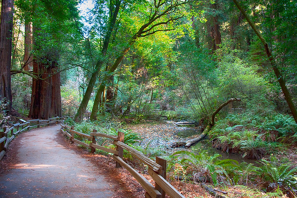 Muir Woods Path
