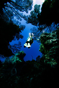 Our underwater diver and Photographer Sharon Shatto