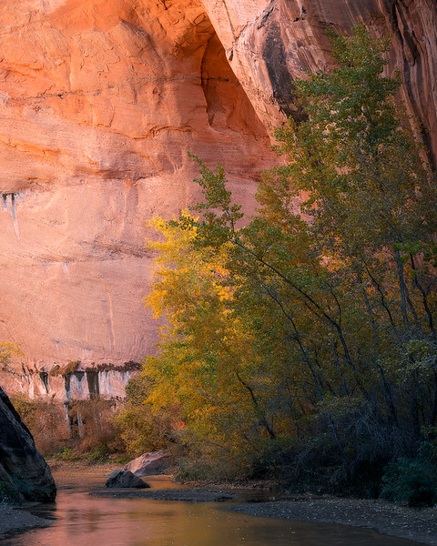 """Canyon Light"""