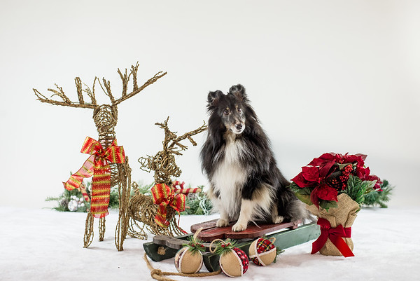 Christmas Pictures Nov4_2017