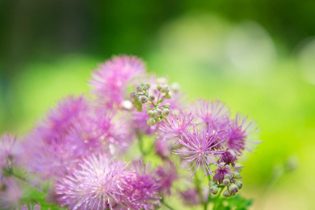 Royal Botanical Gardens - Burlington Ontario