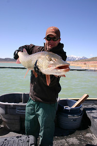 Utah Division of Wildlife Resources biologist Jordan Nielson provides a front view of the huge pike.  After taking a couple of photos, the pike was released back into the reservoir.  Photo courtesy of Scott Root, Utah Division of Wildlife Resources