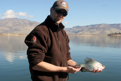 Biologist Ben Nadolski with Pineview Reservoir crappie.  Photo taken 10-31-07 by Phil Douglass, Utah Division of Wildlife Resources.