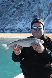 Bear Lake Biologist Scott Tolentino shows a typical Bonneville whitefish from Bear Lake. Photo by Phil Douglass taken December 4, 2007.