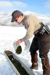 Sgt. Mitch Lane, a Conservation Officer for the Division Of Wildlife Resources puts feed in a trough for mule deer as part of the emergency feeding program in northern Utah.  Photo taken 2-4-08 by Utah Division of Wildlife Resources.