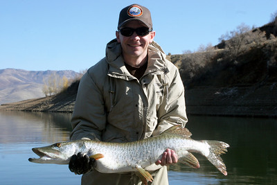 Biologist, Matt McKell, holding a tiger muskie at Pineview Reservoir.  Photo taken 10-31-07 by Phil Douglass, Utah Division of Wildlife Resources.