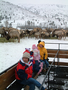 Visitors enjoy a wagon ride through the elk feeding grounds at Utah's Hardware Ranch.  Photo by Marni Lee, Utah Division of Wildlife Resources.