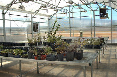 Greenhouse at Great Basin Research Center in Ephraim, Utah