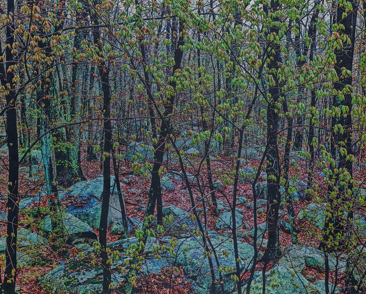 Rain To Leaf To Rock, Hopkinton State Park, Massachusetts 1987