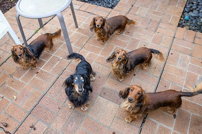 The Pack in the Backyard