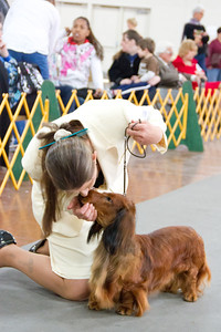 Santa Clara Valley Dog Show