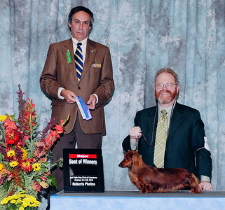 Dog Show Formal Pictures