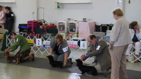 Short video of the final judging line up in Open Class.