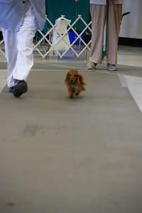 Pink strutting herself in Open class.