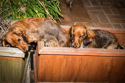Planter Pups