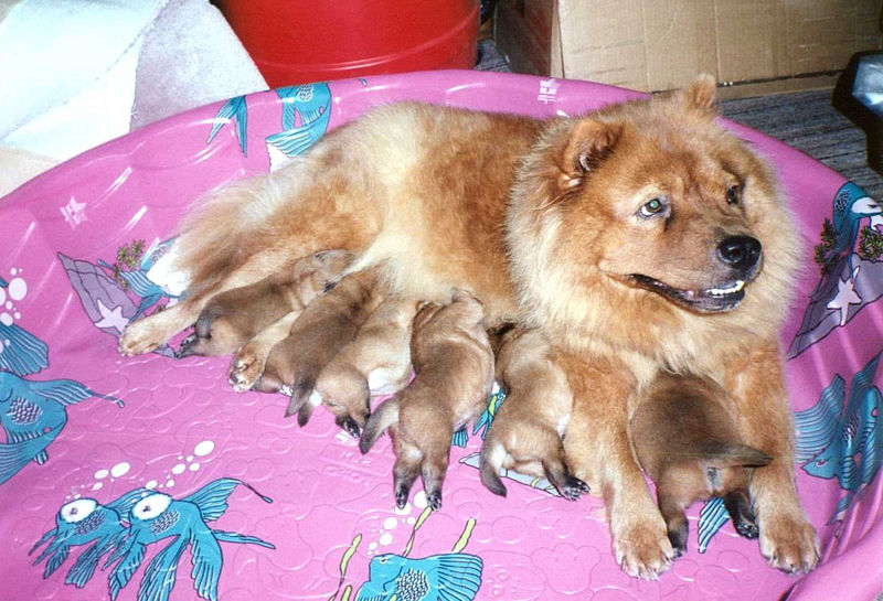 Cha-Cha and 6 puppy