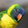 10bird