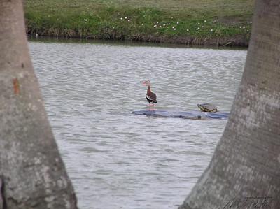 Texas Birds 032009