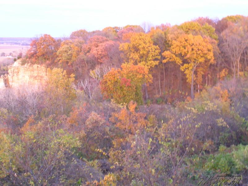 Autumn-2 102806.JPG