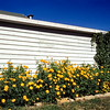 Del's flowers, August 1953, Theodore Roosevelt NMP, ND