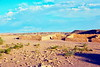 Petrified Forest National Park, 1978.