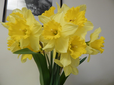 Daffodil Luncheon 2018