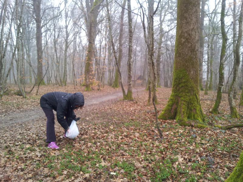 Tur til Forêt de Chaux måtte opgives. Silende regn og tre graders varme! - Regitze fandt dog nogle forfrosne anemoner i skovbunden