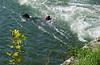 bjergningshund øver sig i oprørt vande