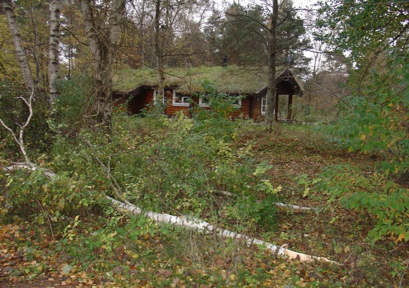 Efterårsstormen lagde to birketræer ned.