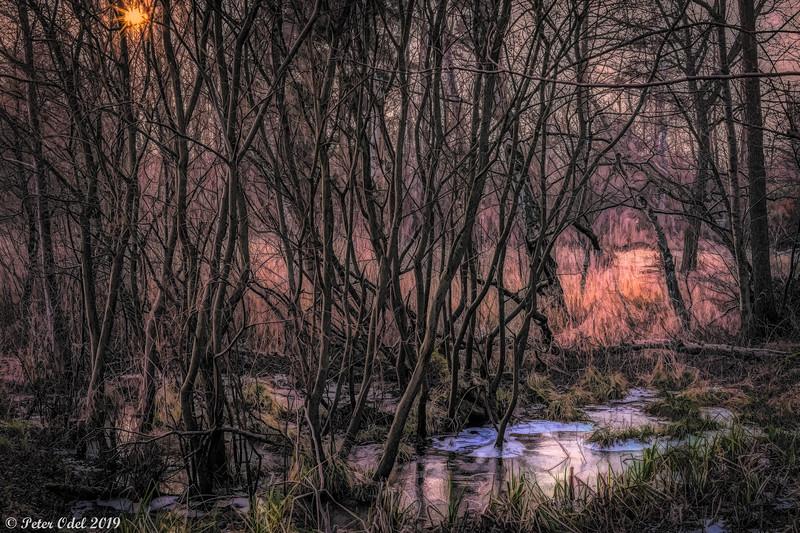 Dagens gåtur... - inden kulden for alvor kommer...
