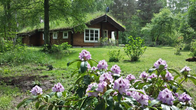 Her er dejligt når rhododendronerne blomstrer