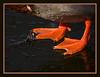 Hot Feet - Mallard drake