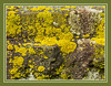 Bright Lichen on Dark Stone