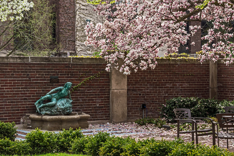 Commencement Saturday morning, and the 'Sea Nymph' is swimming alone with her thoughts.<br /> <br /> DP149-2013  Posted May 29; processed ditto.<br /> <br /> The Courtyard Garden of the Michigan League is a popular place for students and staff during nice weather...except on mornings such as this when everyone's attention is focused elsewhere.<br /> <br /> University of Michigan central campus.<br /> May 4, 2013