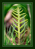 Highlighting a fern frond
