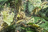 Fall webworm caterpillars