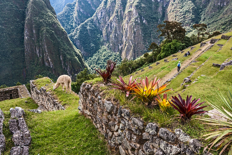 Bromeliads and llama and so much more.